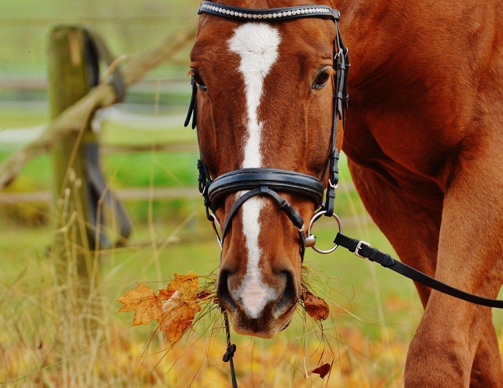 horse, grazing, bridle