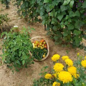 Basket of Veggies 2